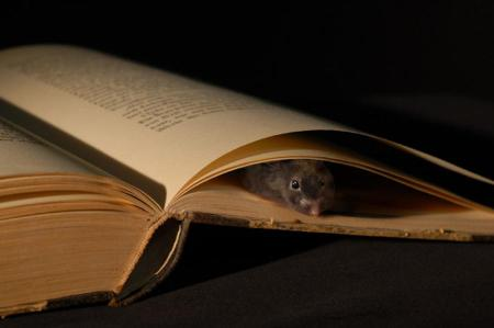 book-mouse