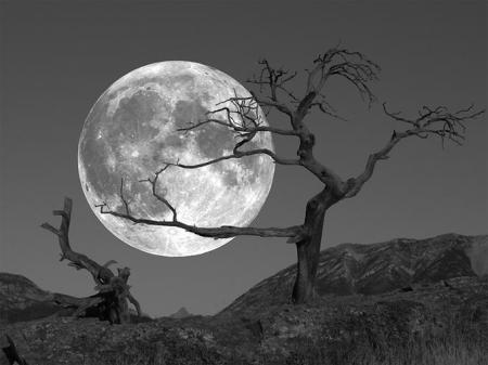 the-moon-and-the-tree