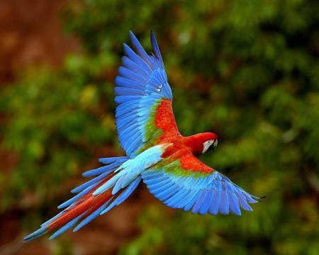 winged-flight