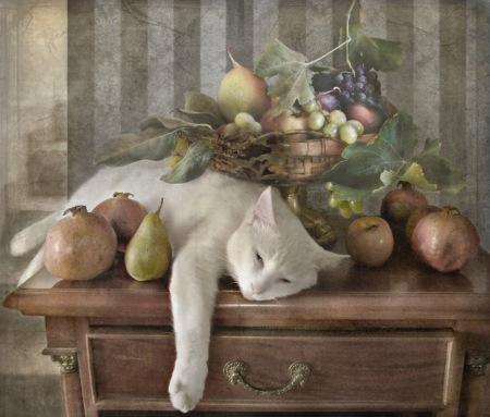 stilll-life-still-cat