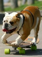 tyson_skateboarding_dog