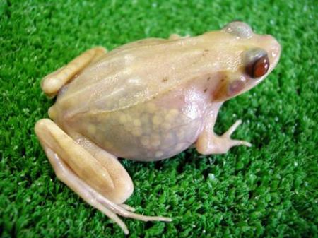 frog_gallery__470x352